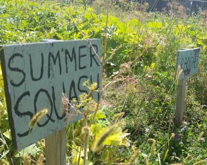 Farm to School Month