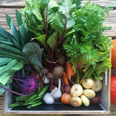 Sprout City Farms-CSA-food box